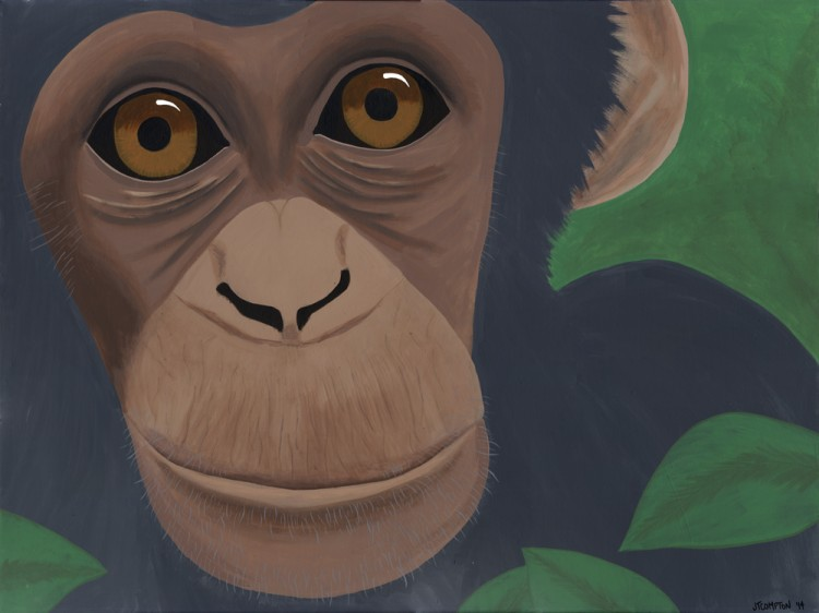Chimpanzee-Webshot
